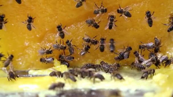 Bienen auf Honig