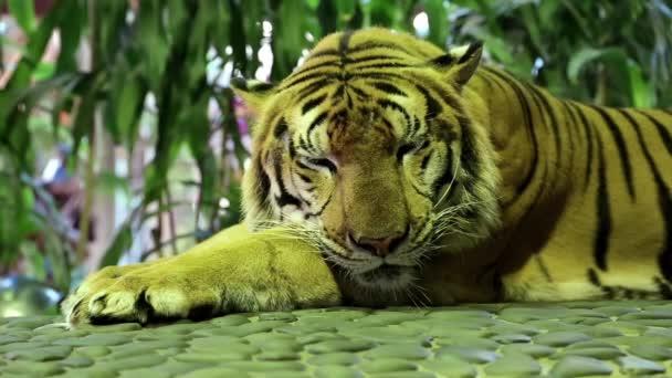 Sárga tigris