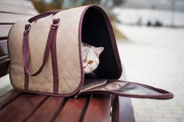 Cat in pet carrier