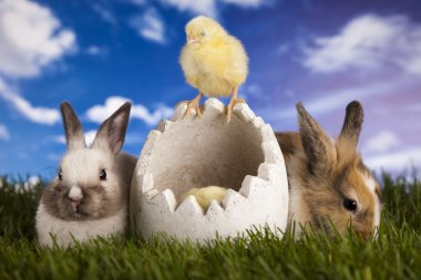 Bunny and chick and green grass