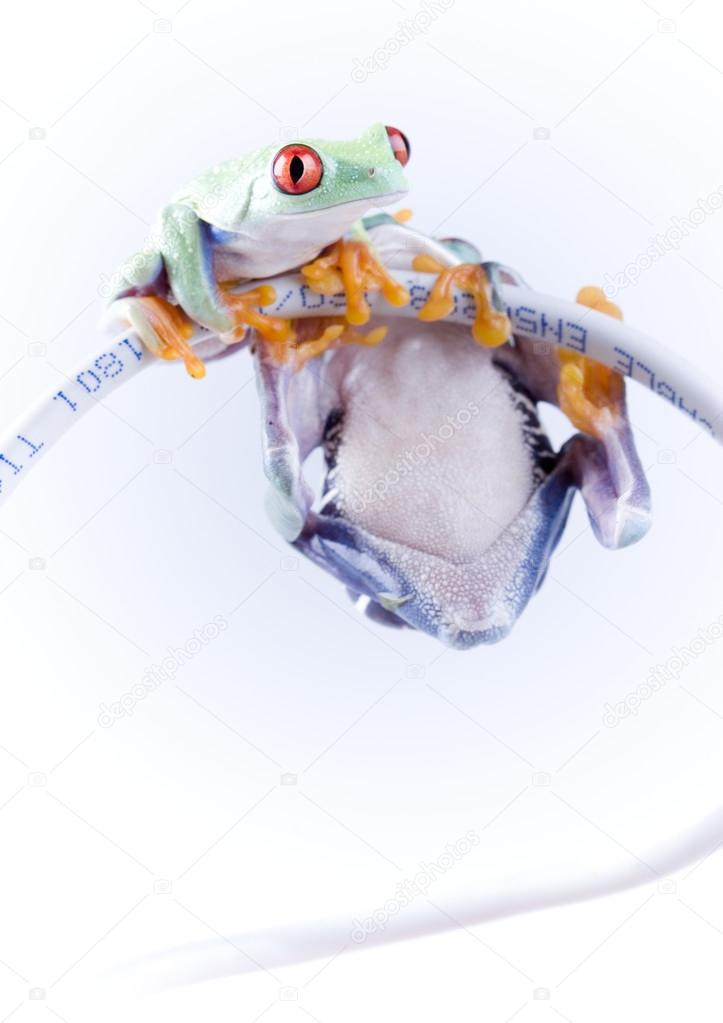 frog on cable internet stock photo janpietruszka 30691549