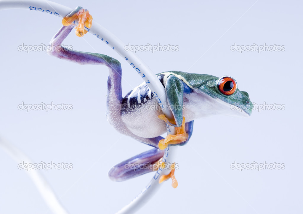 frog on cable internet stock photo janpietruszka 30691567