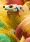 Fotografie žába s vejci