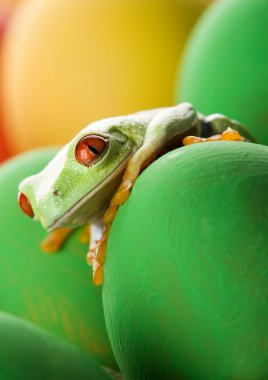 Frog in the eggs