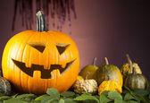 Halloween dýně, děsivé jack