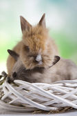 Fotografie Easter spring bunnies