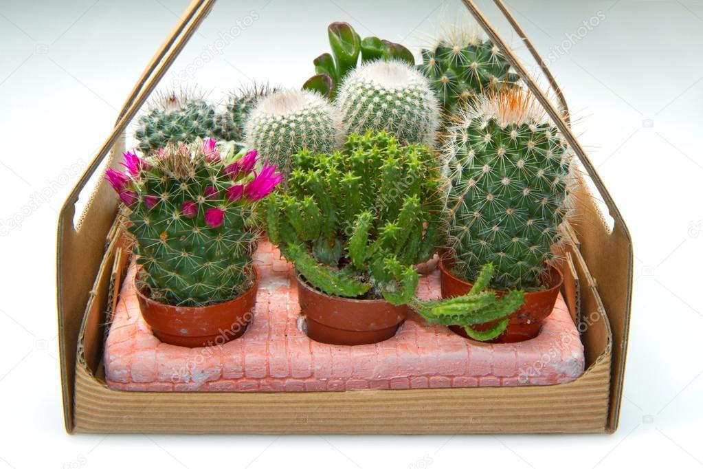 Grupo de varias plantas suculentas en macetas fotos de for Fotos de plantas en macetas