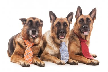 Three Business dogs