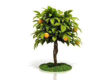 3d rendered orange tree full of yellow oranges isolated over white