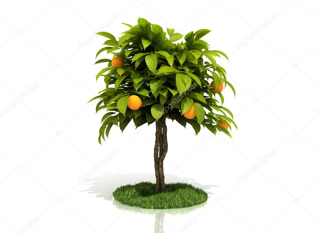 3d rendered orange tree full of yellow oranges isolated over white