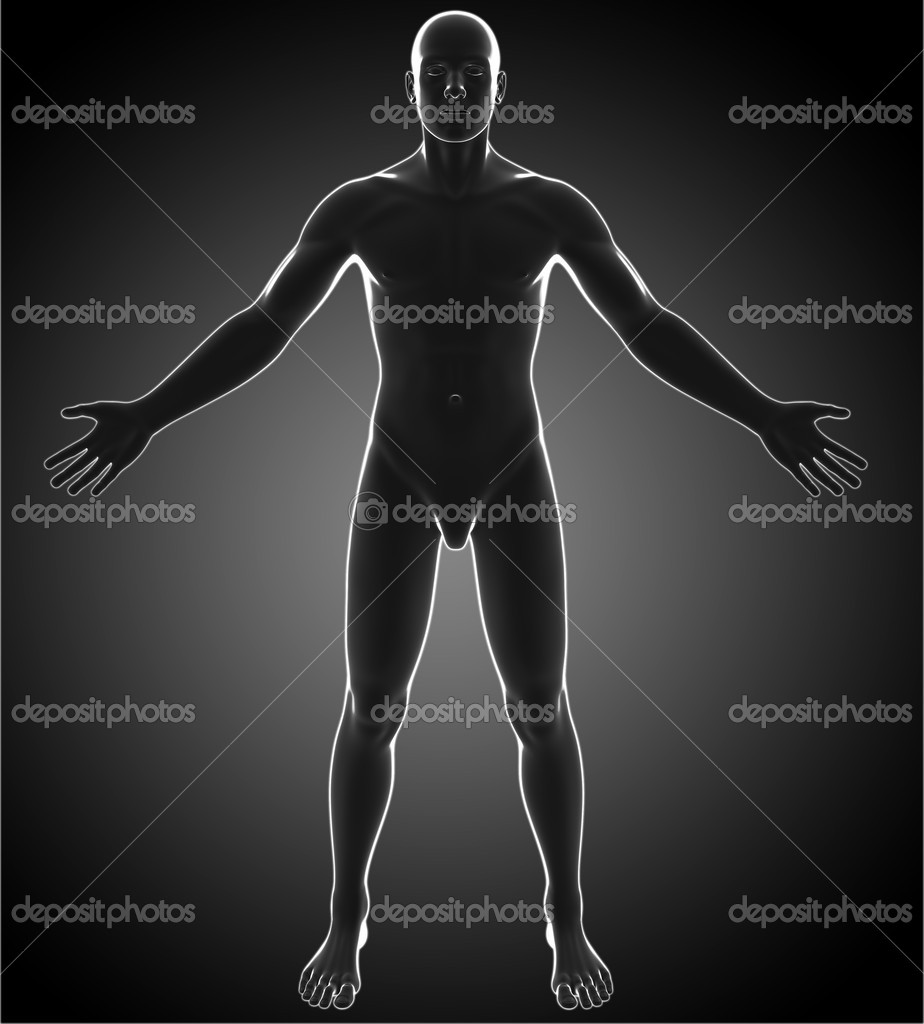 männliche Anatomie — Stockfoto © abidal #27976709