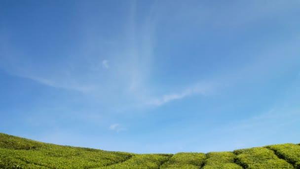 piantagione di tè con cielo blu