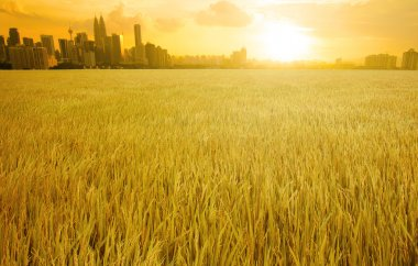 kuala lumpur skyline over grass land field suring sunset