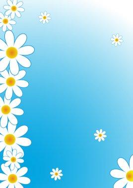 daisies frame white flowers