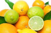 Set of different fresh citrus fruits, isolated on white