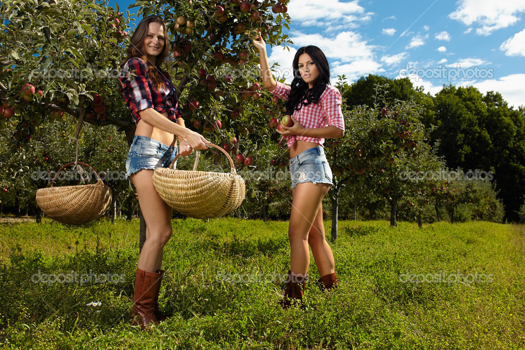 sexy women picking apples stock photo xalanx 33712563. Black Bedroom Furniture Sets. Home Design Ideas