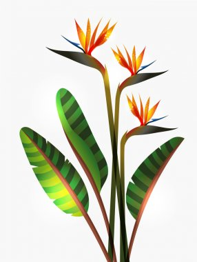 Bird of Paradise flower isolated over white background. EPS10 file version. This illustration contains transparencies and is layered for easy manipulation and custom coloring clip art vector