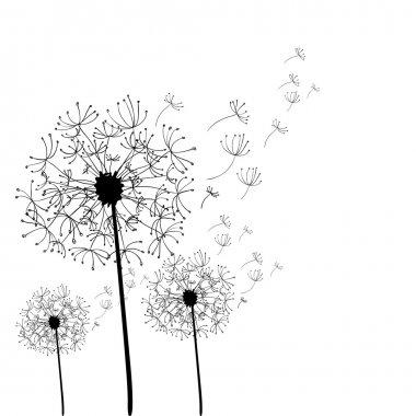 Hand drawn dandelion isolated