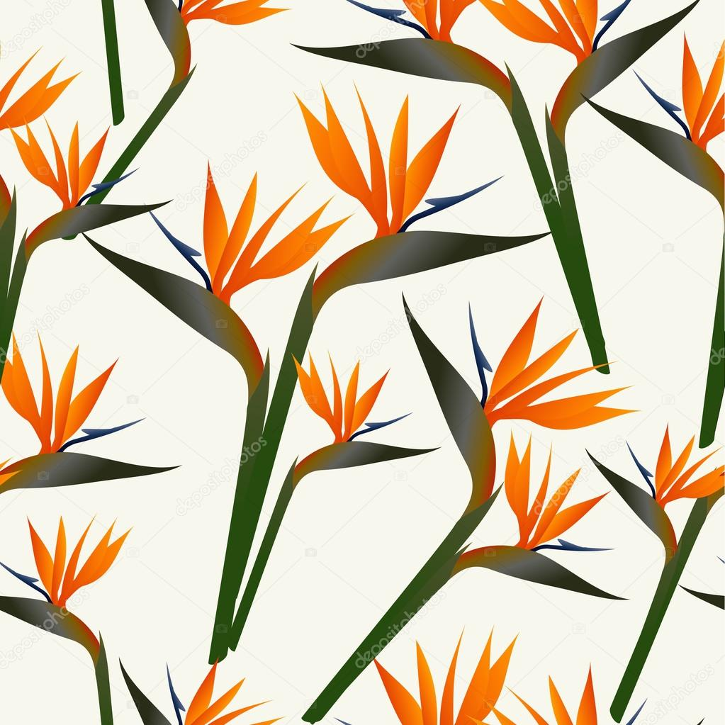 patrón de flor Ave de paraíso — Vector de stock © cienpies #20243533