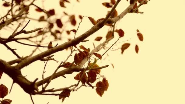 Ročník podzim pohybující se listy jsou blízko