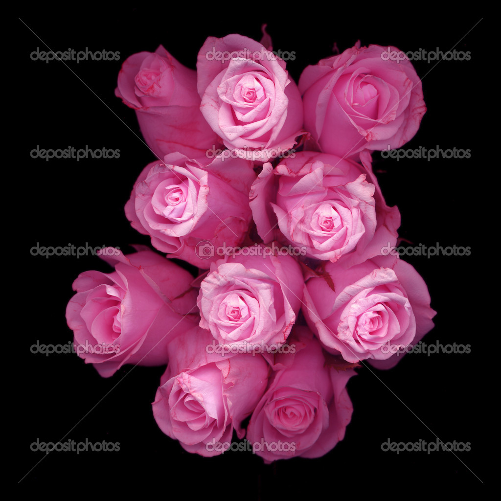 Beautiful pink roses on black background stock photo beautiful pink roses on black background photo by jacquimartin izmirmasajfo