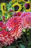 Photo Dahlias and sunflowers