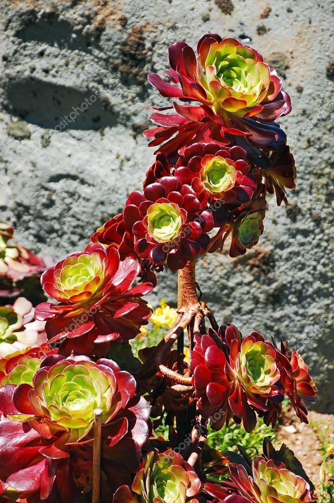 Colorful cactus plant