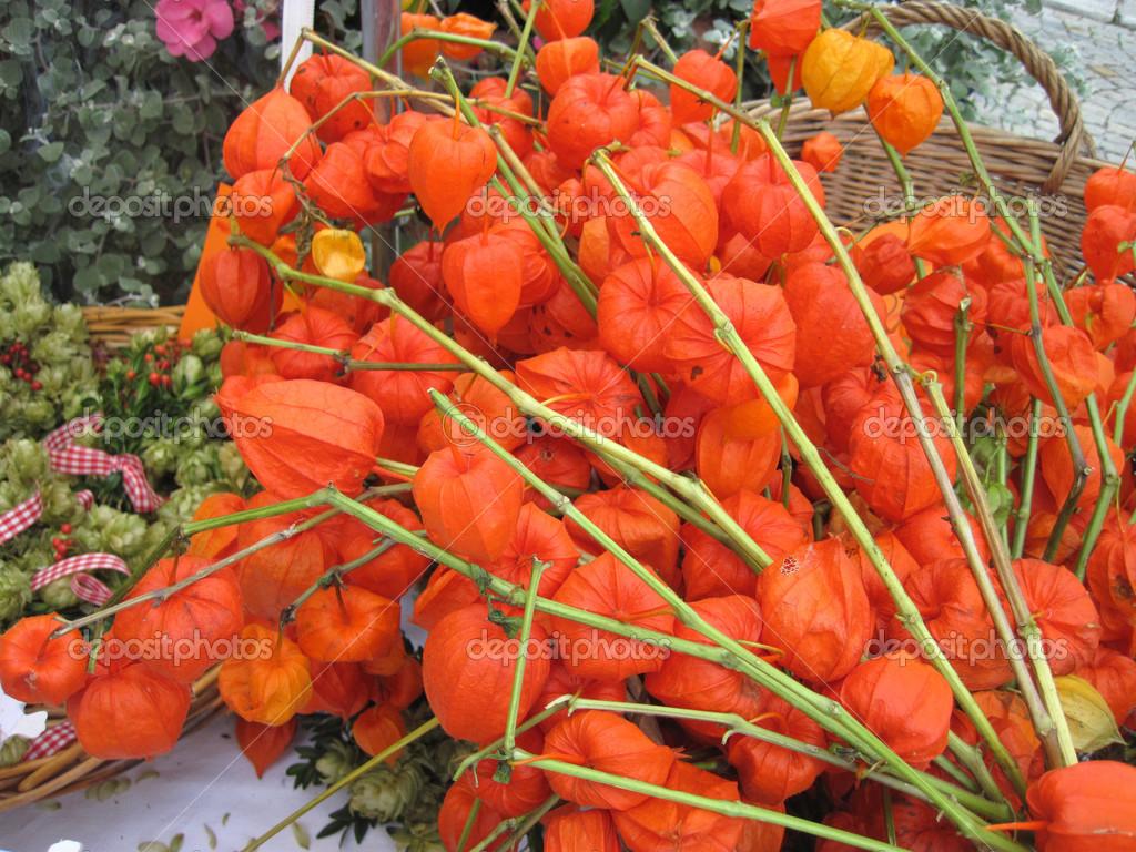Fleurs Sechees Orange Automne Lanternes Chinoises Photographie