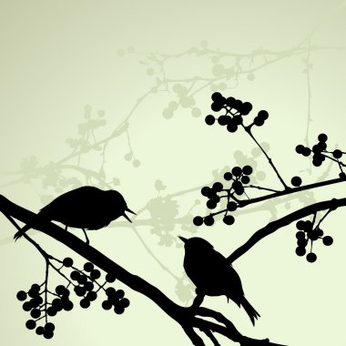 Birds on the branch during the summer day