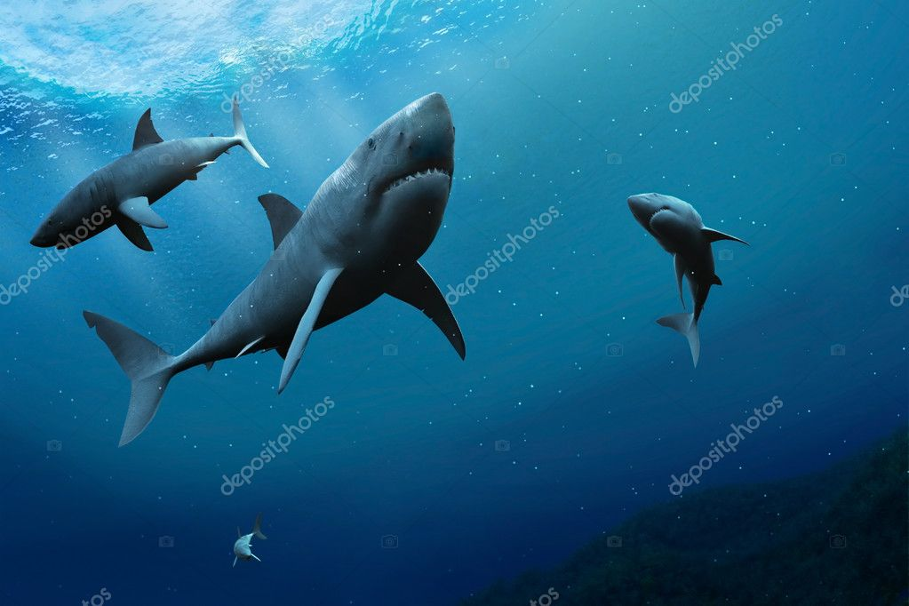 Sharks in the sea.