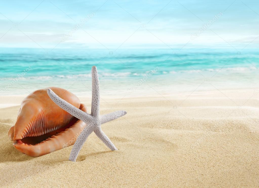 Big shell and starfish on beach