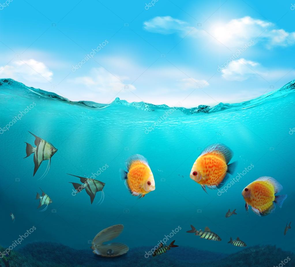 Fishes in the sea.