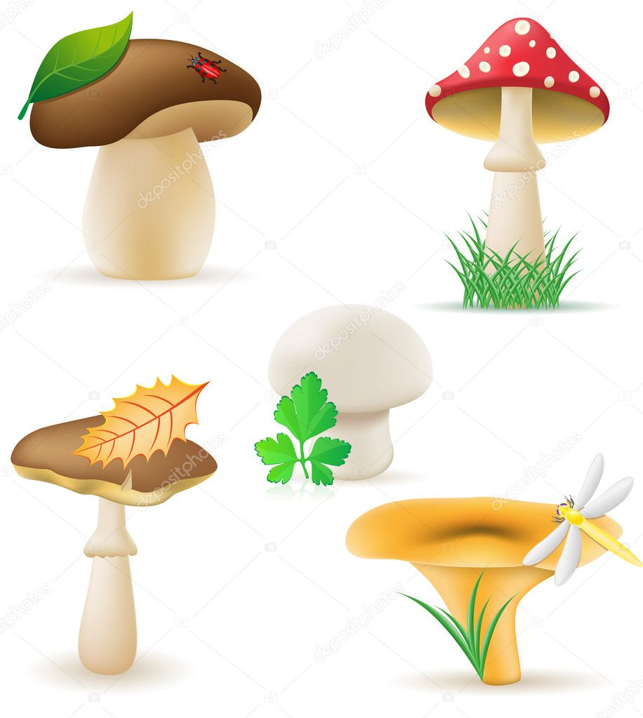Set icons mushrooms vector illustration