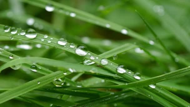 orosené trávě