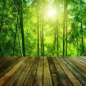 Bambus-Wald.