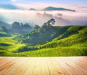 Fotografia piantagioni di tè