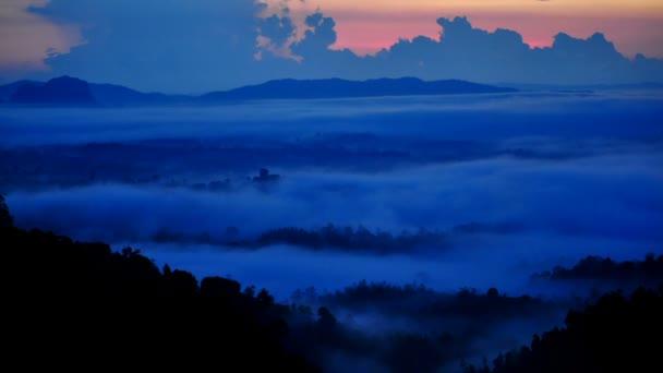 HD720: lasso di tempo bello sulla foresta tropicale in Alba