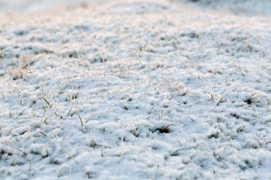 Abstract natural background with dry grass in snow