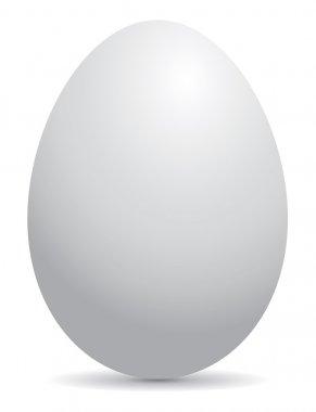 white egg, vector