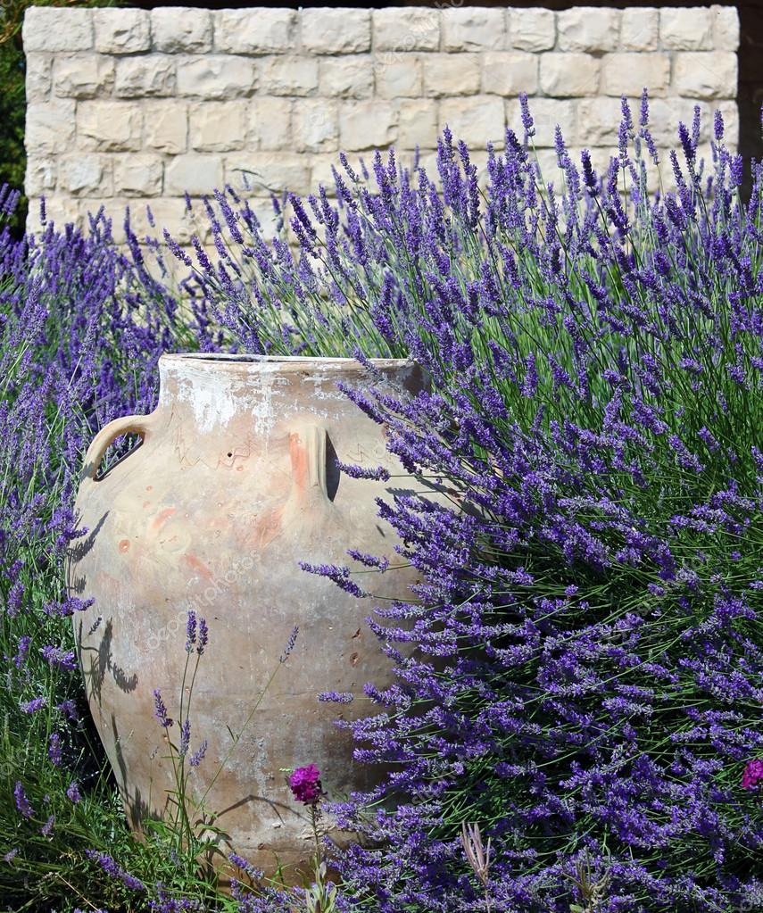 Jar against Stonewall amidst Lavender