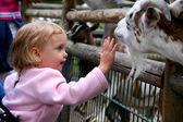 Fotografie v zoo