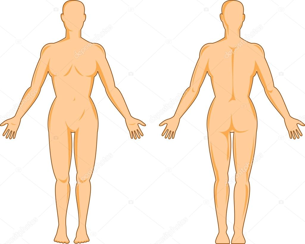 anatomía humana, mostrando una mujer de pie — Archivo Imágenes ...