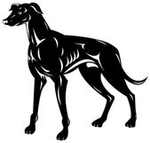Greyhound Hund retro