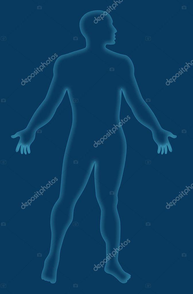 Male Human Anatomy Outline Blue Stock Photo Patrimonio 30005539