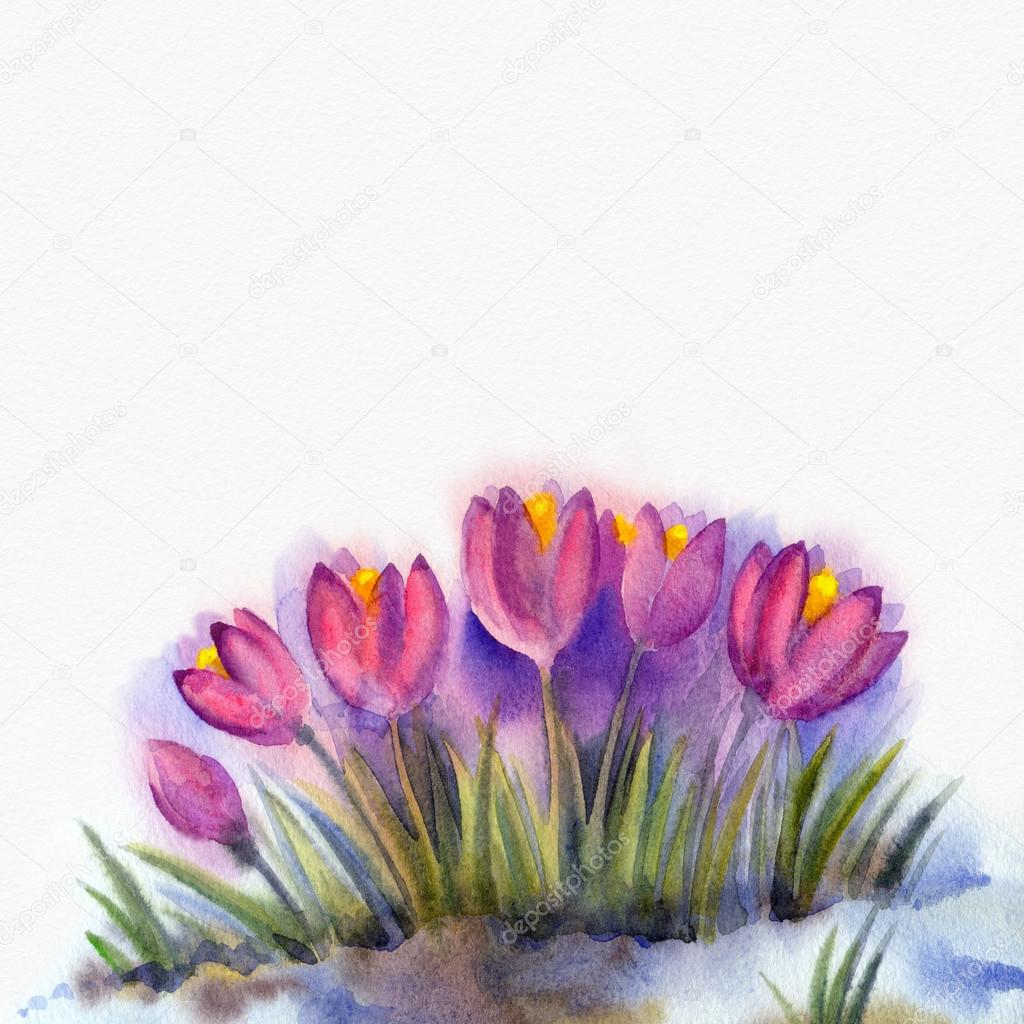 Watercolor Background Of Early Spring Flowers Crocus Stock Photo