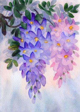 Watercolor painting. Lush clusters of wisteria
