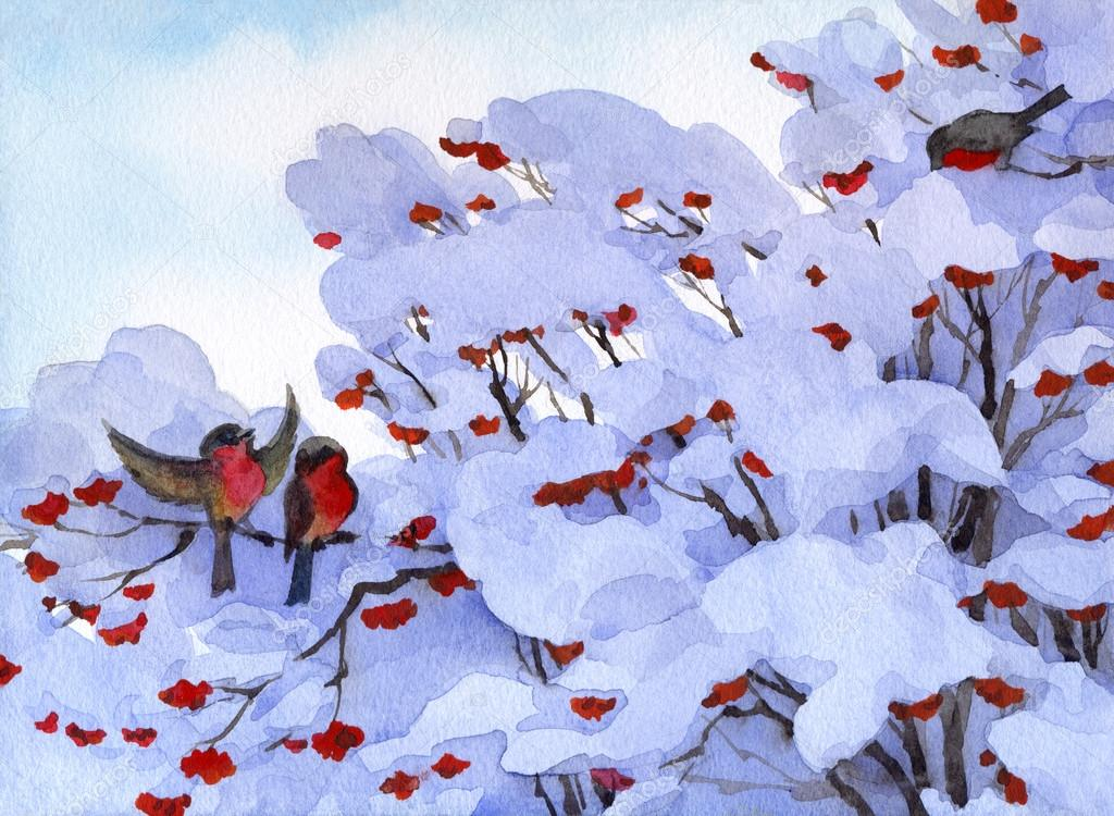 Watercolor winter scene. Bullfinch sitting on branches of viburn