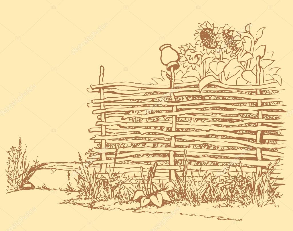 Vector landscape. Blooming sunflowers behind the old fence