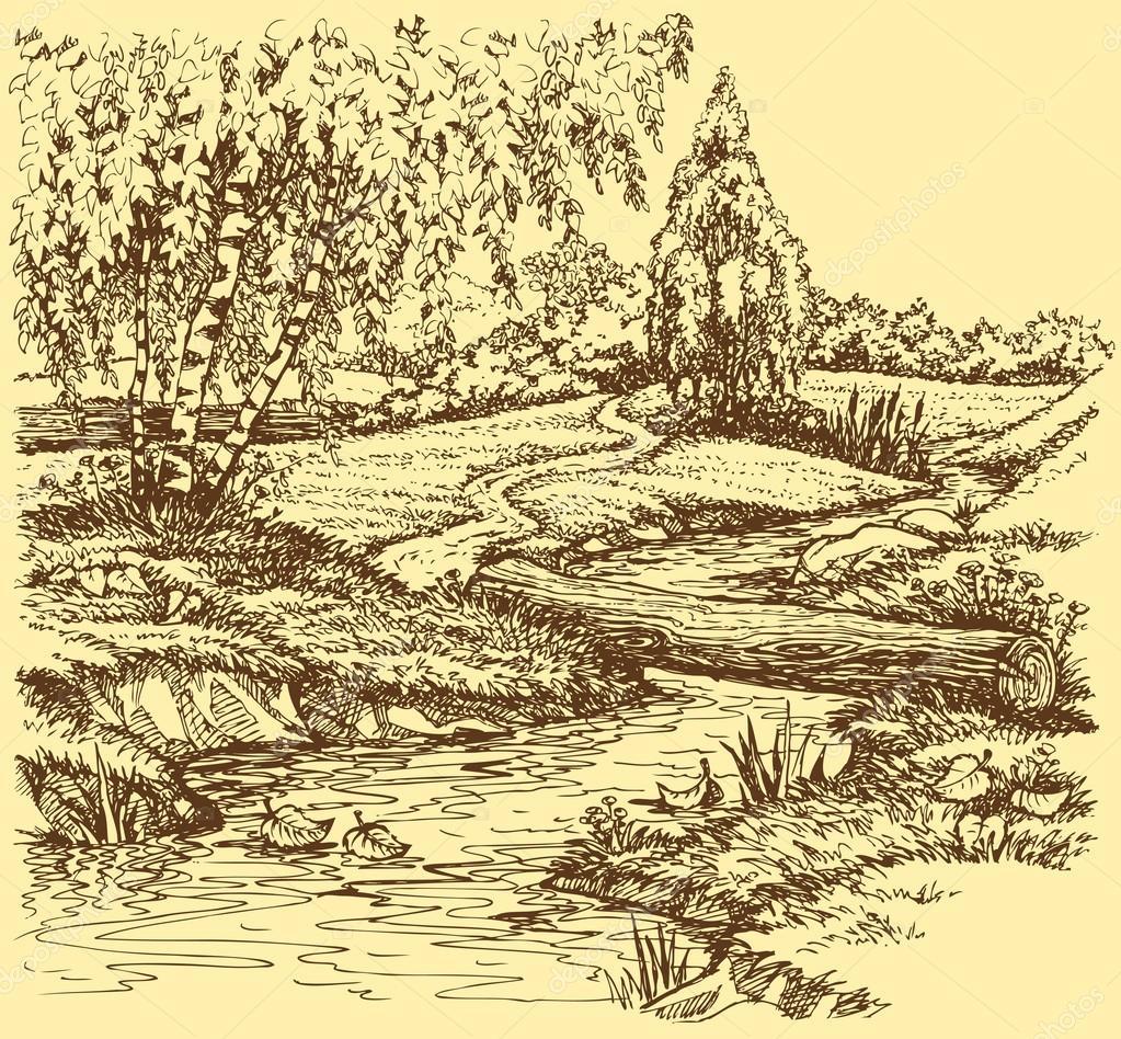 Vector landscape. Birch trees near trail over creek