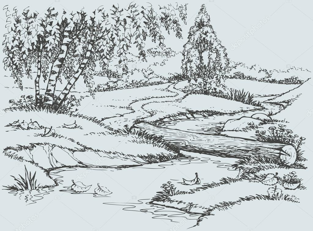 Vector landscape. Birch trees near the trail over the creek